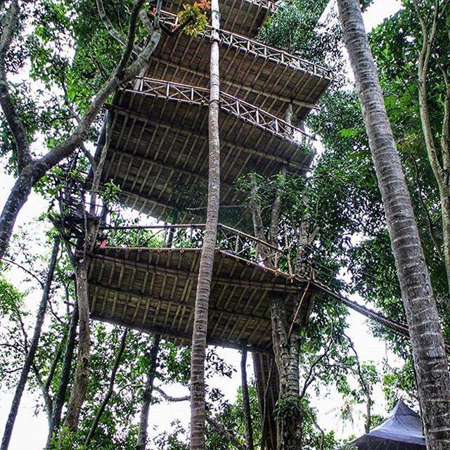 Rumah Pohon Temega Pesona Wisata Baru di Bali - Bali