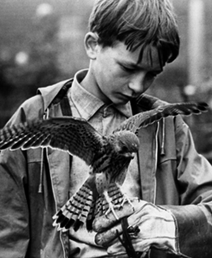 """Barry Hines' 1968 novel """"A Kestrel for a Knave"""" was about a mistreated and deprived 15 year old lad training and caring for a fledgling kestrel. Ken Loach's low-budget feature film adaptation the following year was titled simply """"Kes"""" and starred a young David (Dai) Bradley with Colin Welland and Brian Glover."""