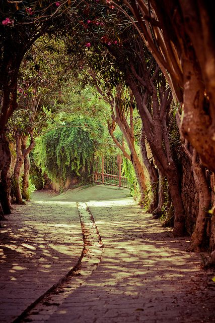 Oleander lane in the ancient city of Byblos, Lebanon