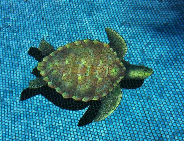 Pool Turtle Maui Hi Swimming Pools Swimming Pools Pinterest