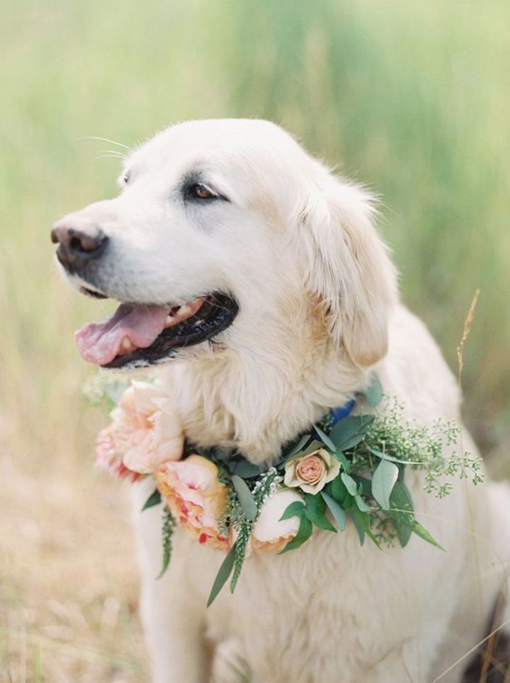 Beautiful golden and beautiful floral collar ~ we ❤ this! moncheribridals.com