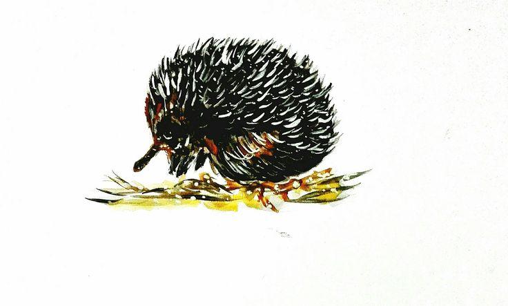Hedgehog .