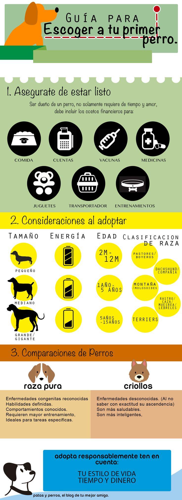 Adoptar perros, infografía