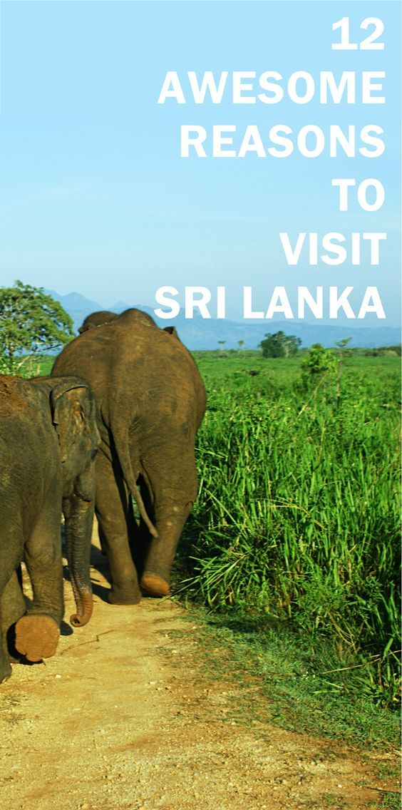 Find out 12 reasons to visit Sri Lanka.Are you a person who willing to travel another country and ended up with a list of countries in your mind and struggling to select a one?  Scenic beaches,Amazing nature,warm climate and seas,great culture,delish food,and thrilling adventures..Does that sound like the place you want to visit on your next trip?Then check out this post