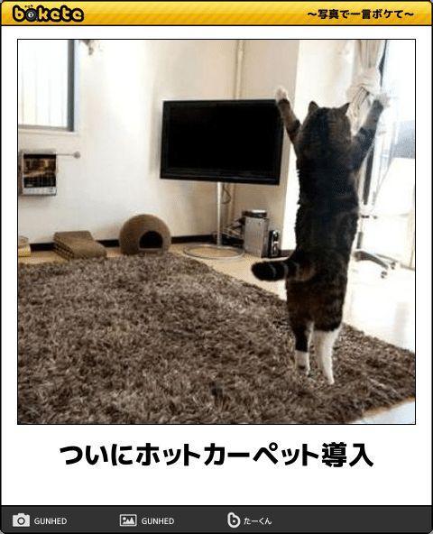 【野生の天才たち】笑いすぎ注意!センスを感じる猫のボケて12選   CuRAZY [クレイジー]