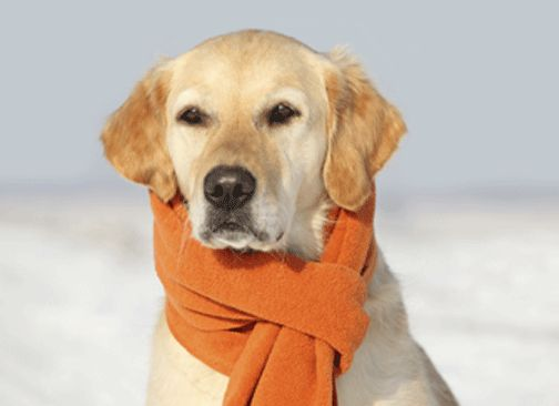 Information how to protect your pet in winter weather.