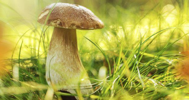 Anbau-Tipps von Experten: So züchtet man #Pilze in seinem Garten!  Foto: iStock/Kesu01/Thinkstock