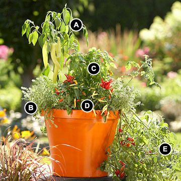 Vegetable Garden in a Pot: English Thyme, Container Garden, Garden Overflowing, Hot Wax, Gardening Ideas, Gardening Garden Ideas, Vegetables Garden, Vegetable Garden, Favorite Vegetables