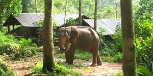 Elephant Trekking Koh Chang – Companies and Prices
