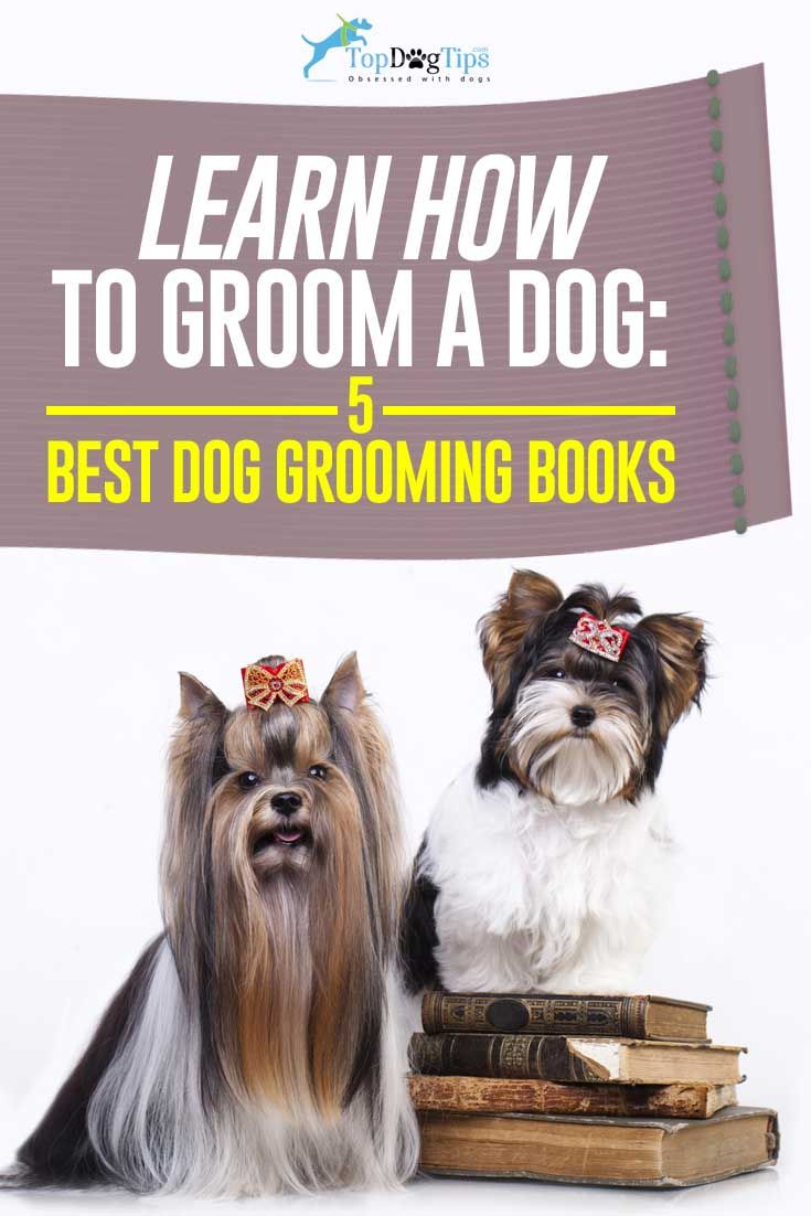 Top Best Dog Grooming Books