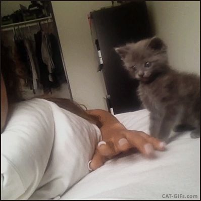 CAT GIF • Cute blue Kitten playing and fighting against human fingers. So cute ♥