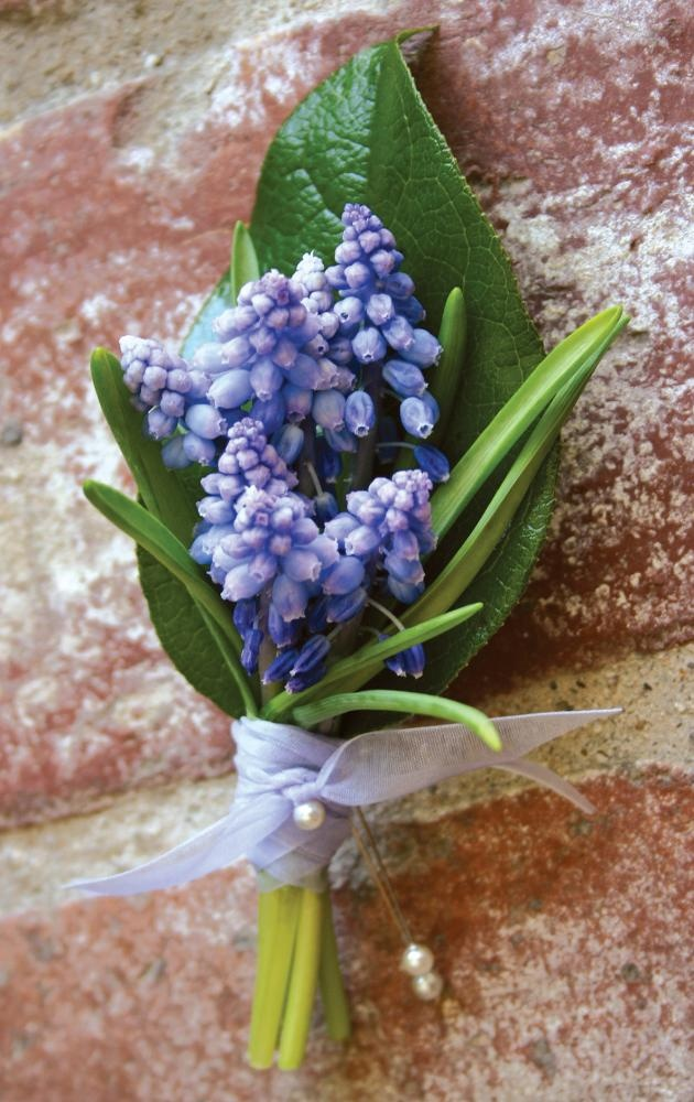 Grape hyacinth, posy for Lucia ?