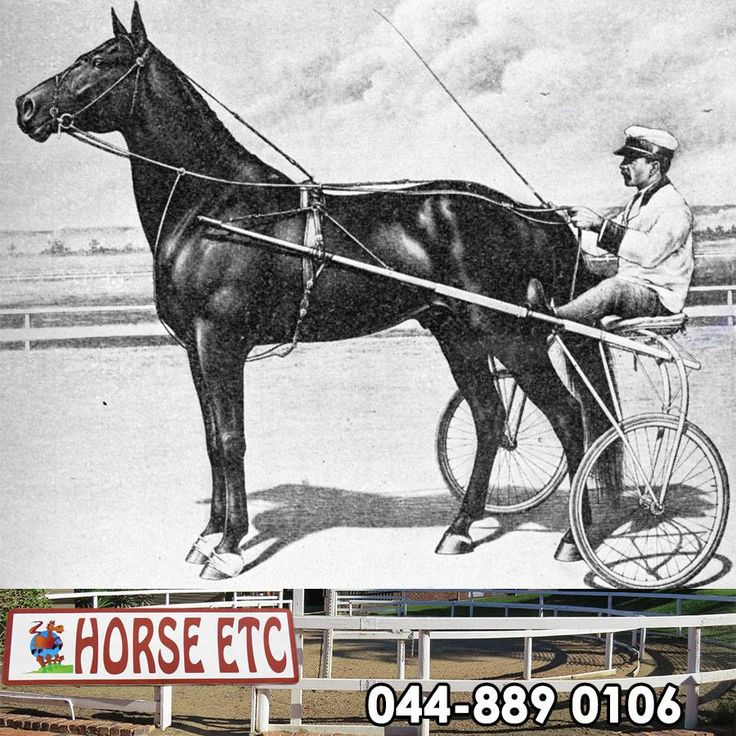 In 1948, Adios was bought by harness racing driver, Delvin Miller, to stand in stud at his Meadow Lands farm near Washington, Pennsylvania. The horse proved to be a tremendous stud, considered by many to be the greatest in harness racing #history. #tbt #throwbackthursday