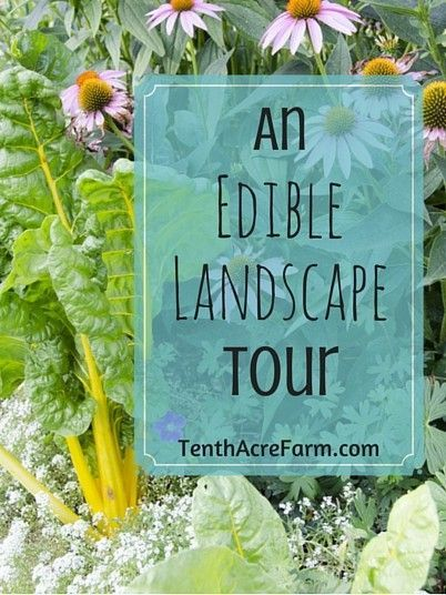 Take a virtual tour of our neighbor-friendly edible landscape.