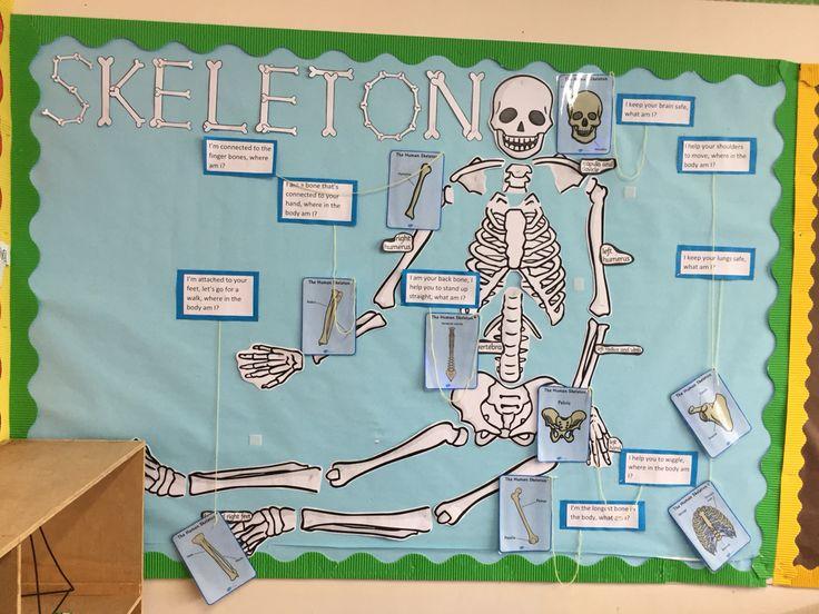 Bones, classroom display year 7