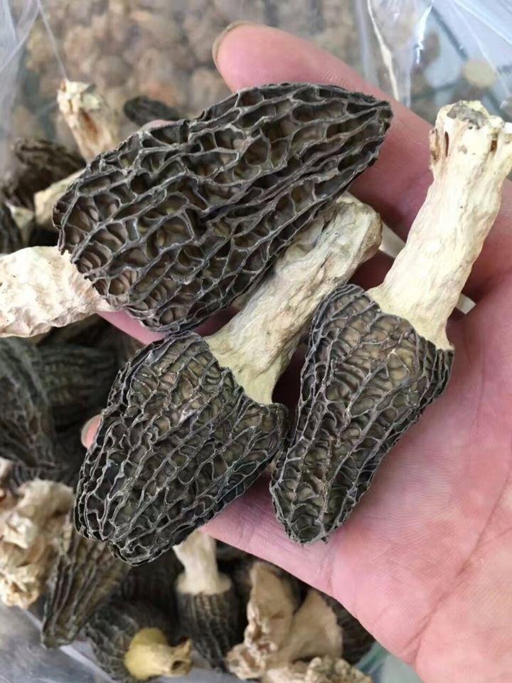 Alibaba supplier Price of black morel mushroom/dried morel mushroom for sale