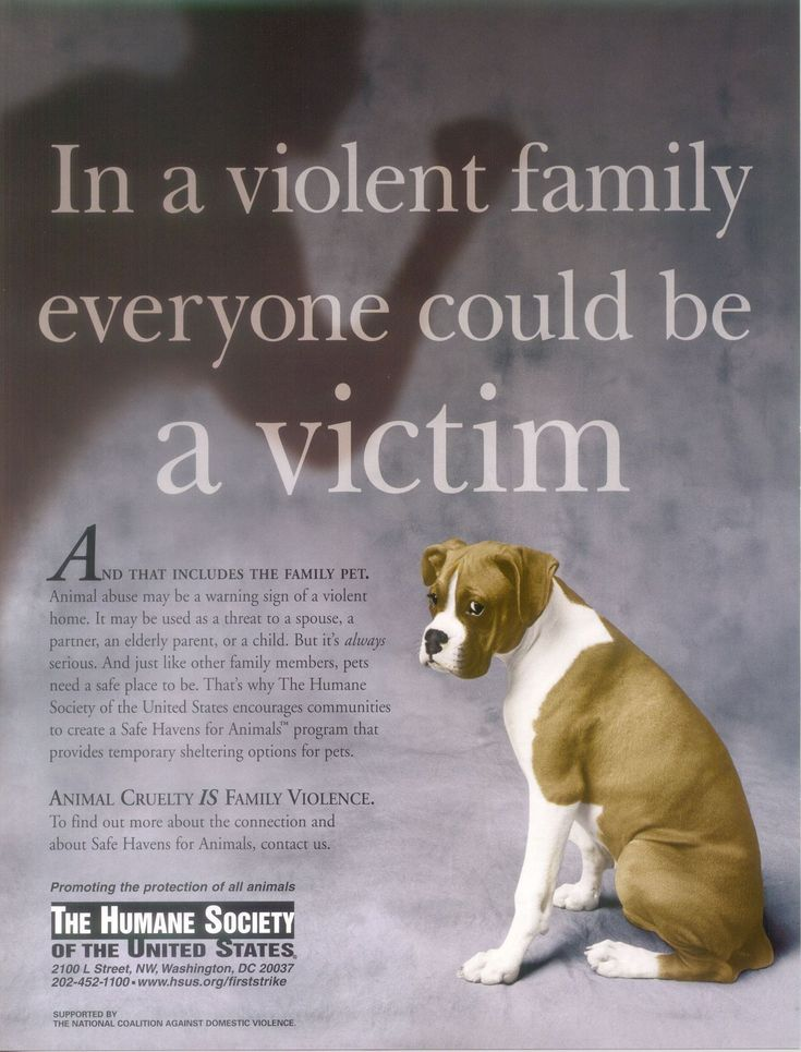 What should I talk about in my animal cruelty project?