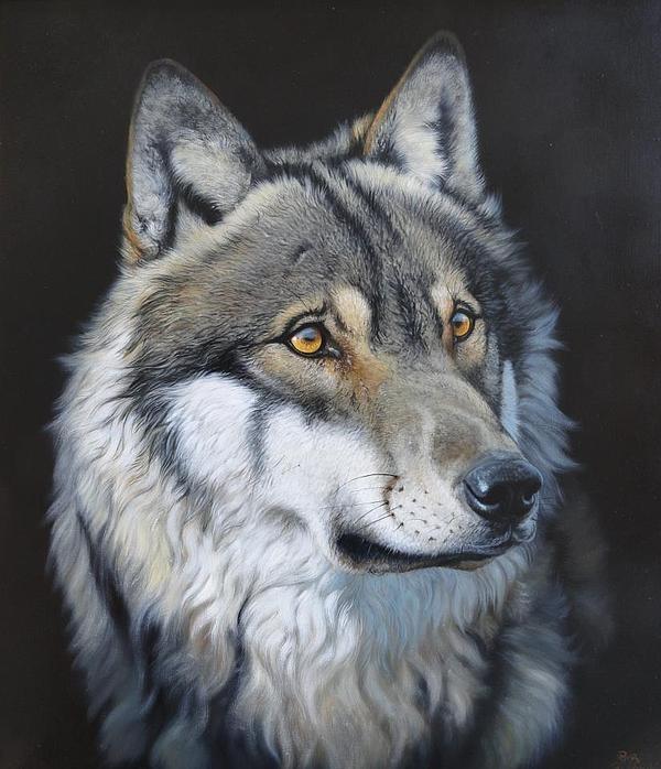 Притча о волках в картинках индеец позволяют