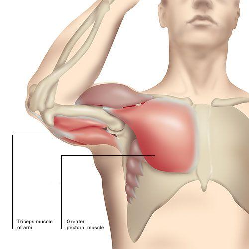 Effektivt träningsprogram för träning av armar, bröst och lår hemma, inklusive träningsdagbok. Endast hantlar krävs. Ladda ner gratis.