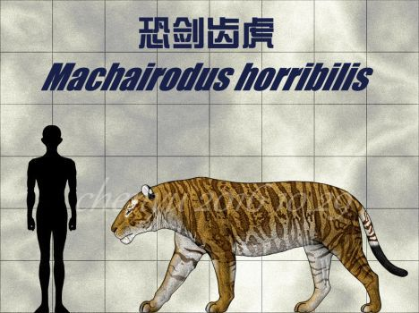 10+ Machairodus info