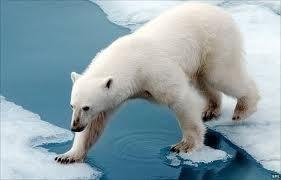 beruang-kutub.jpg (281×180)