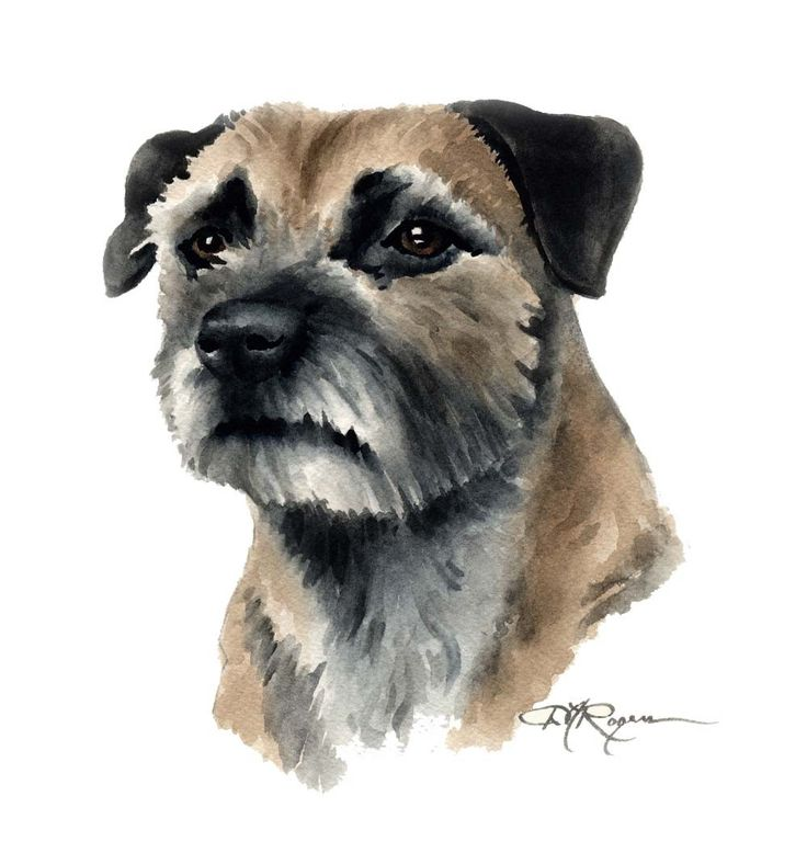 BORDER Terriër hond kunst print ondertekend DJ Rogers door k9artgallery op Etsy https://www.etsy.com/nl/listing/11389285/border-terrier-hond-kunst-print