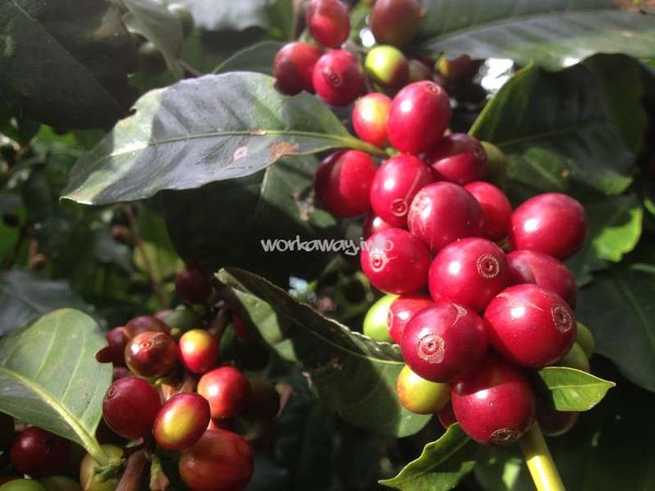 Join other volunteers on an eco coffee farm near Bogotá, Colombia - workaway.info