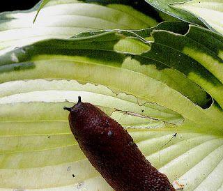 Je tuin ecologisch beschermen tegen slakken en ongedierte | GoedomWeten