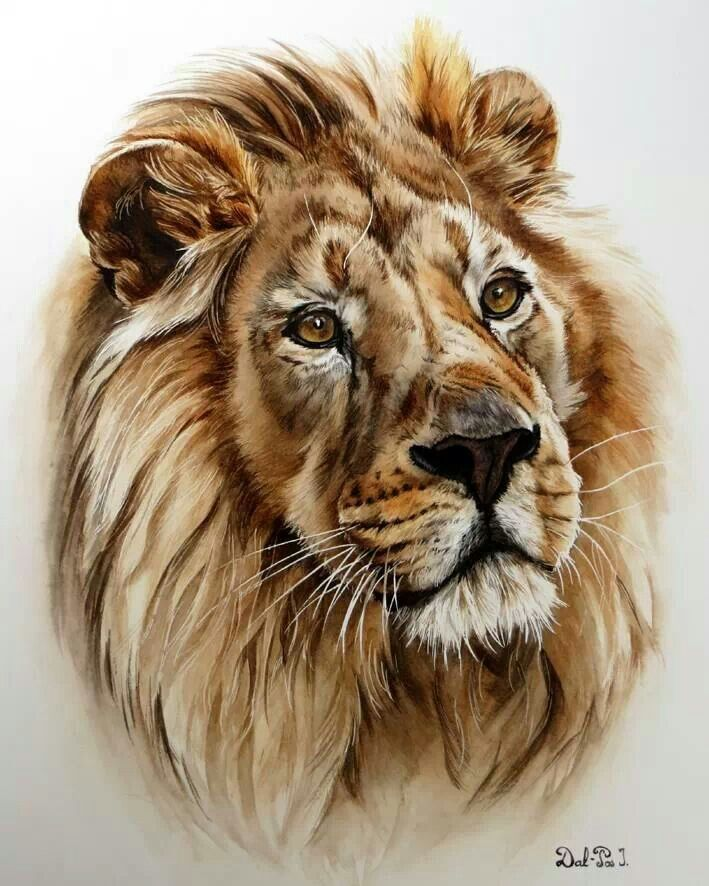 Lion Study watercolor pencil painting--I'd like to know how one does hair like that with water color pencils. Description from pinterest.com. I searched for this on bing.com/images