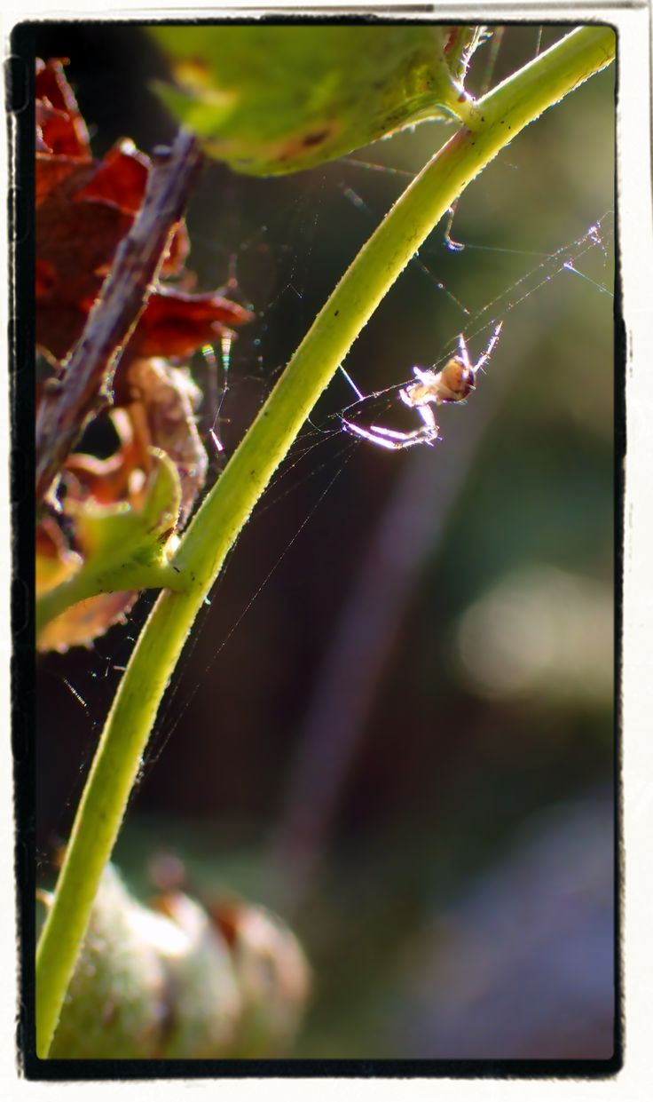 Tiny, tiny spider in fall light. Finland 9/2017.