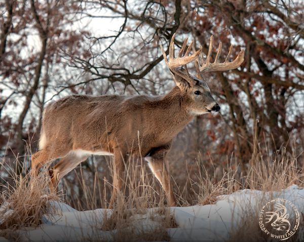 5 Tips For Hunting Longer #LegendaryWhitetails