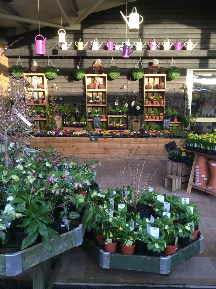 Timmermans Garden Centre Nursery Garden Outdoor