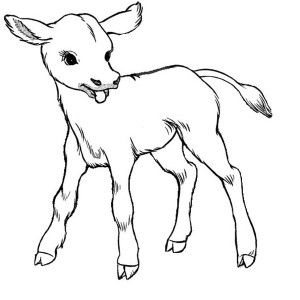 cow just born baby cow coloring page just born baby cow coloring page