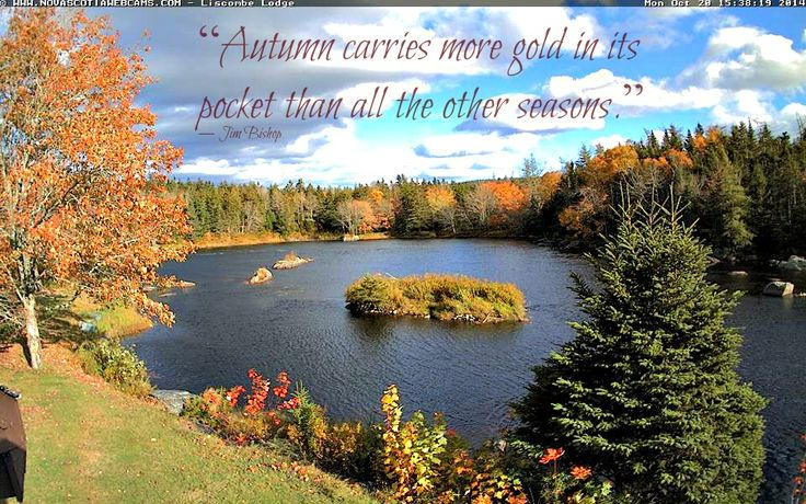 """Autumn carries more gold in its pocket than all the other seasons.""  ― Jim Bishop  http://www.novascotiawebcams.com/en/webcams/liscombe-lodge/"