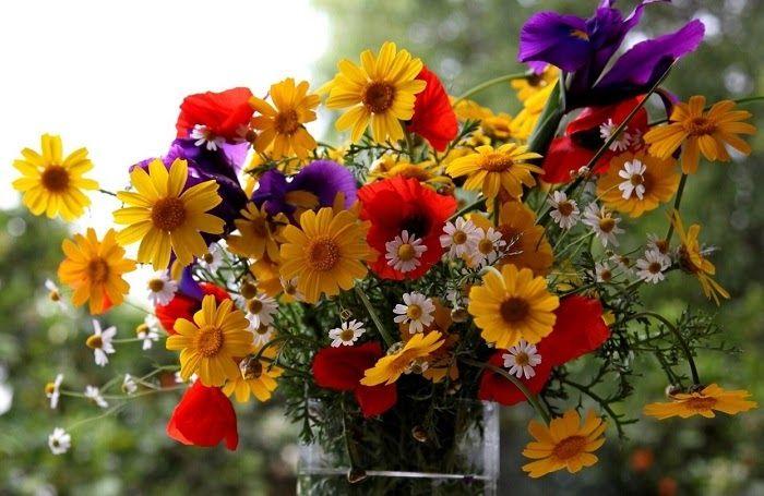 жасмин польза,цветы лекарственных растений,настурция,астра,жасмин,хризантема,