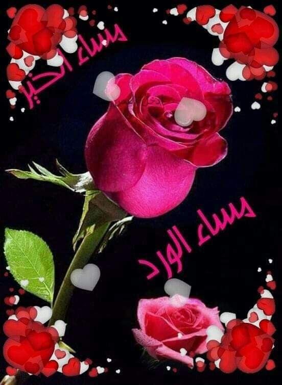 مساءكم ورد أنتـــم عبقـــه ونغـــم أنتــم لحنـه ونور أنتـــم ضيـــاؤه مــــساء الورد للغالييـــن على القلب Rose Flowers Plants