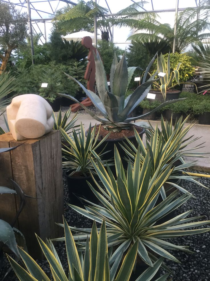 Sculpture & plants, perfect combination