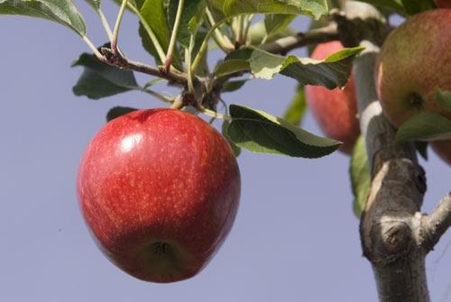Fruit picking time