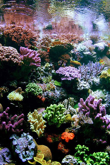Corals, beautiful but I still like zoanthids the BEST. I need an ENTIRE very large tank, specifically dedicated to showcase their vibrant beauty....some day!! -rcc