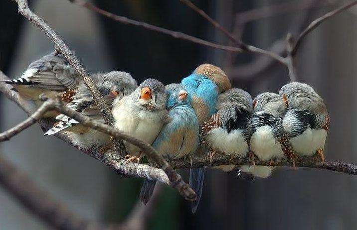 Cozy birds.