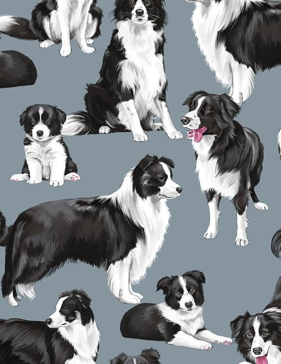 Border Collie Fabric C7365 You Choose Size Timeless Treasures