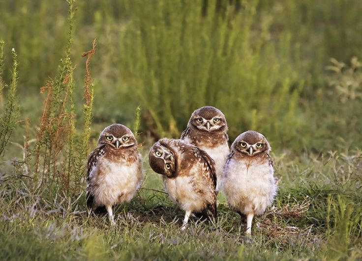 Comedy Wildlife Photography Award 2016