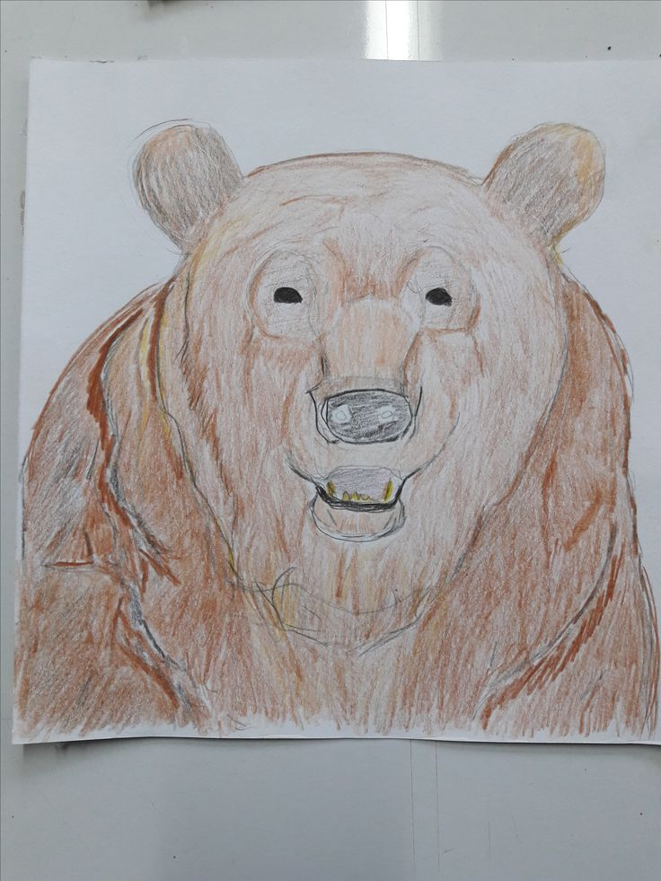 Development 2: Erase some segment of lines form basic line 2, shape the bear's head, and shade it using color pencils.