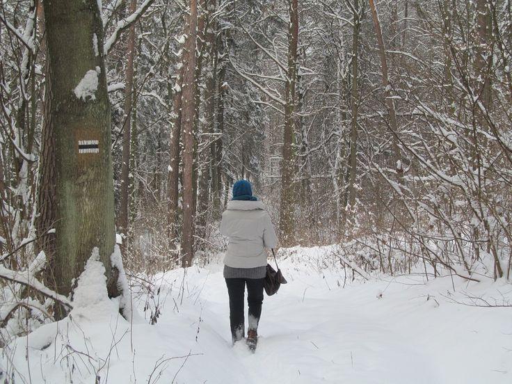 Szlak pieszy do Szestna  Źródło: www.it.mragowo.pl
