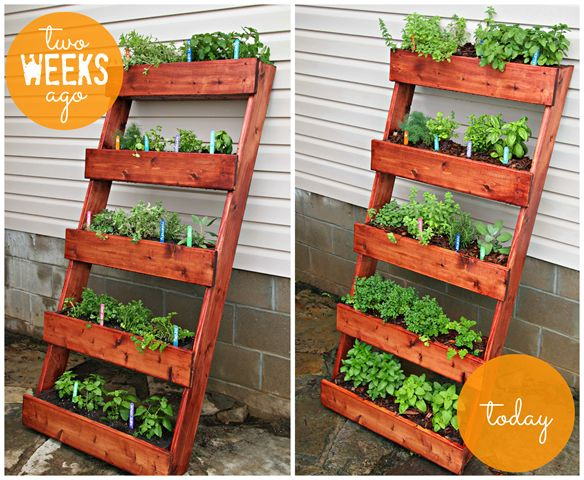Our Yard Projects With The Home Depot Updates Digin Ad Garden Plant Ideas Pinterest Diy Herb And