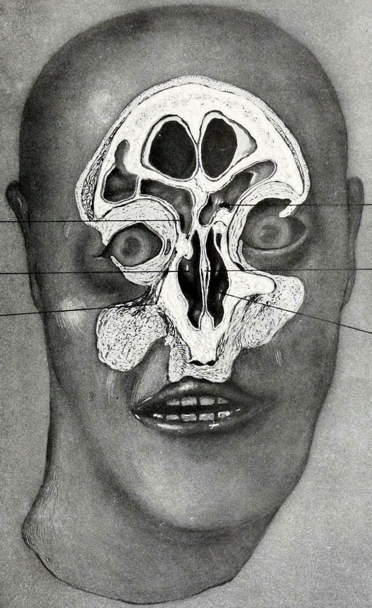 463 best vintage anatomy images on pinterest brain creepy stuff