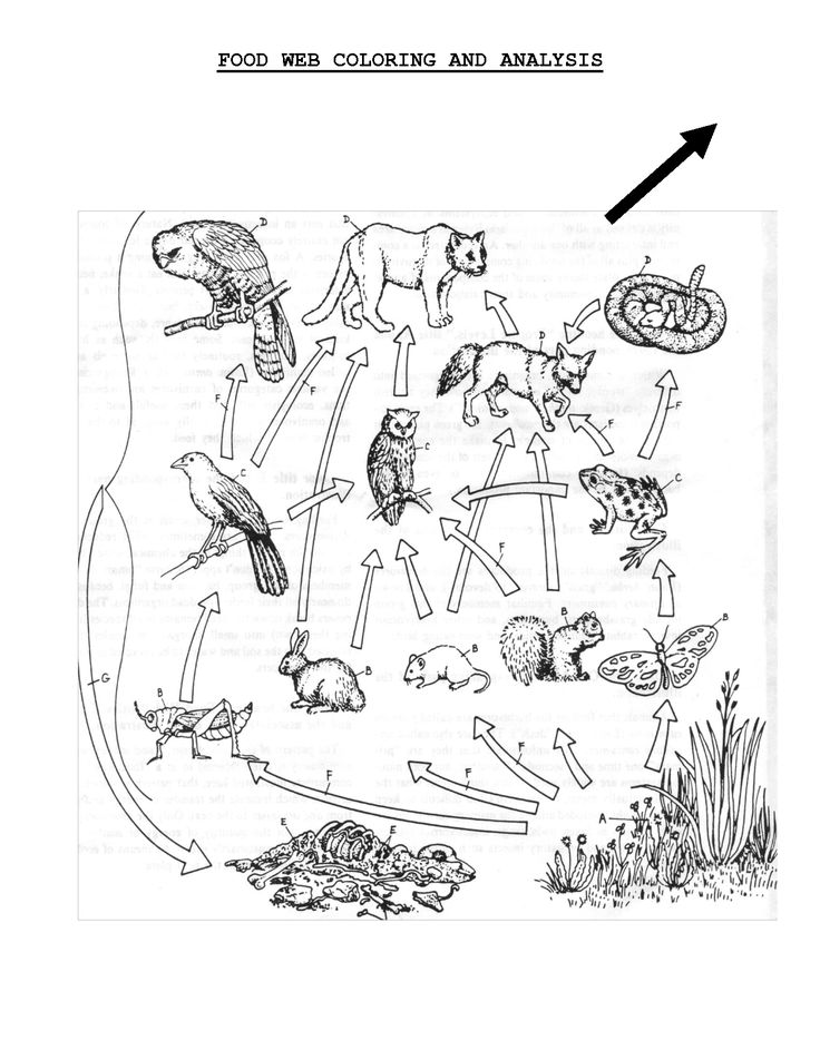 Ecosystem Drawing Activity Student Sheet Food Web Yahoo