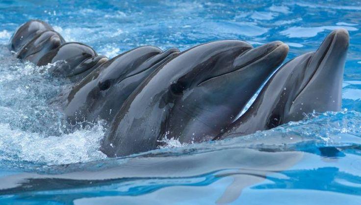 Батумский дельфинарий — BATUMI TODAY