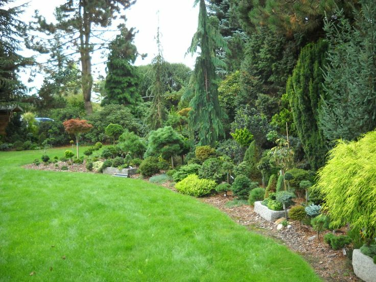 206 Best Evergreens For Small Yards Images On Pinterest