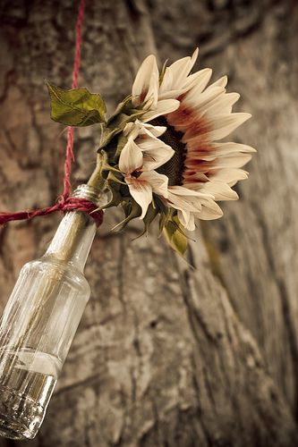 Learn how to plan a hippie wedding ceremony --different aesthetic, but like the simple bottle idea--